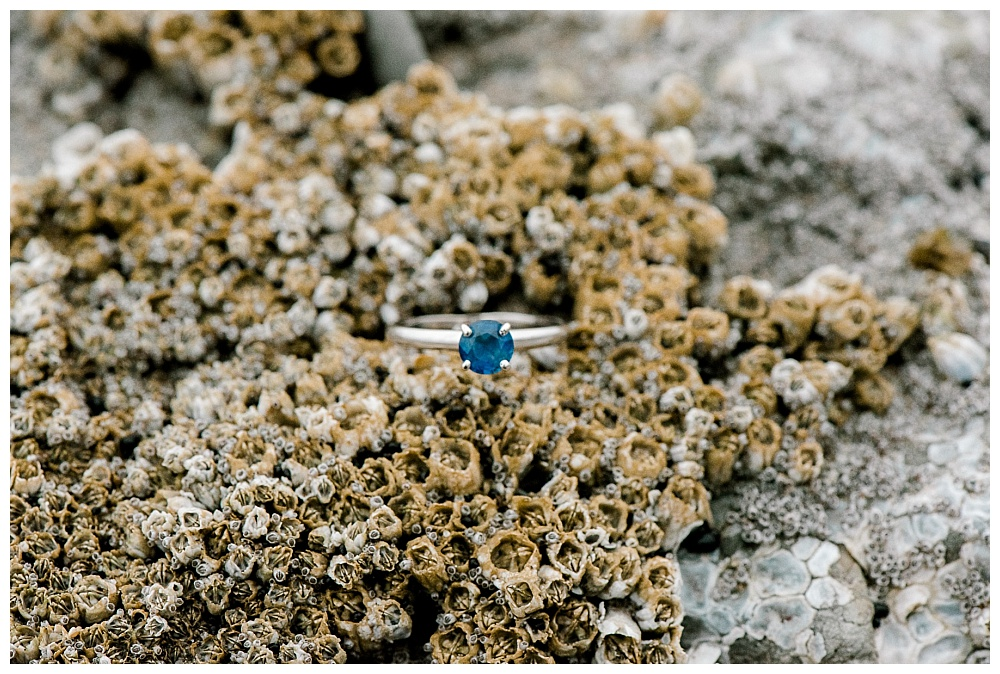 sapphire engagement ring nestled between barnacles on oregon coast.